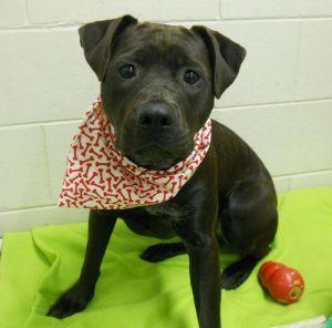Rosie (A194692)