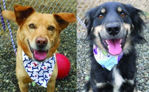 Maggie (A173110) & Candy (A173109)