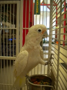 A122103 Willow2