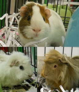 Top - Gramble; Bottom left - Wilber; Bottom right - Piglet