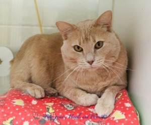 Butters (A203934)