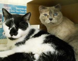 Sylvester&Violet2