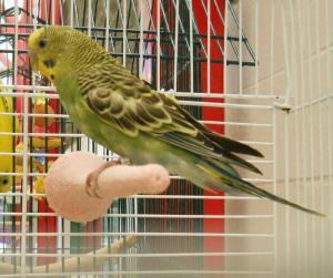 Chico (A206809)