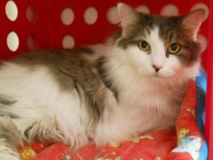 Patches (A165479)