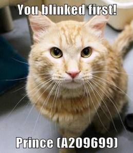 A209699 Prince meme