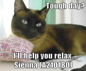 A210180 Sienna meme