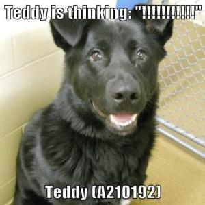 A210192 Teddy meme
