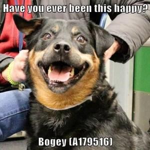 A179516 Bogey  meme