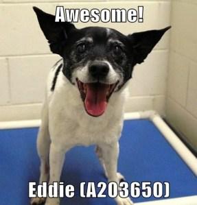 A203650 Eddie meme