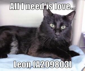 A209803 Leon meme