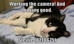 A210675 Stewie meme