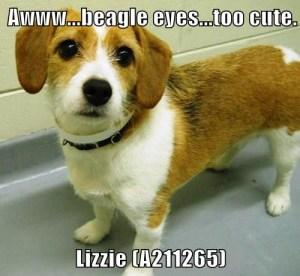 A211265 Lizzie meme