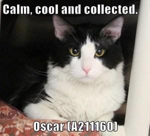 A211160 Oscar meme