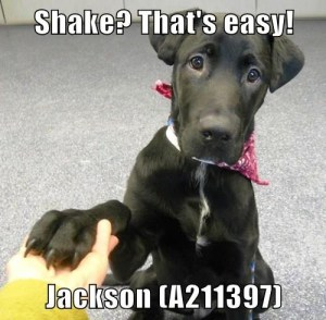 A211397 Jackson meme