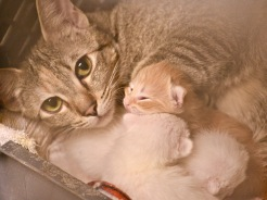 Momma and kittens 1