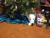 Monte_christmas tree