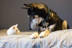 Whisper's kitten is feeling better!